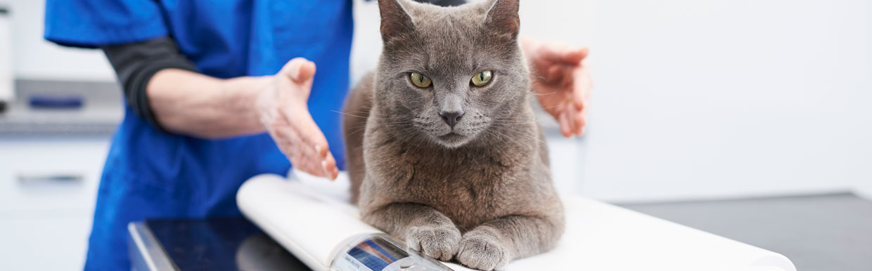 time courses for cat
